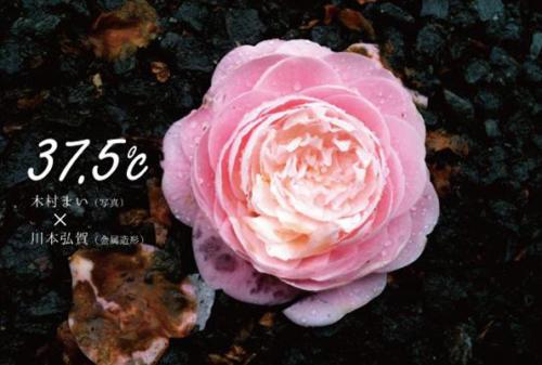 15_03_kawamotokimura001