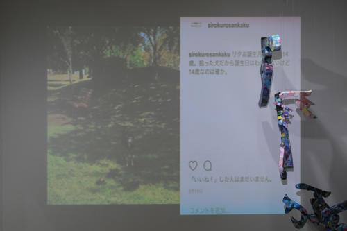 17_11_shiroinekokuroiinusenakanobakemono051