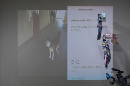 17_11_shiroinekokuroiinusenakanobakemono061