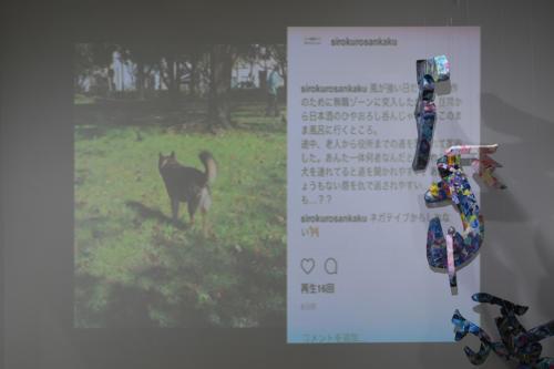 17_11_shiroinekokuroiinusenakanobakemono070